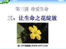 《�生命之花�`放》珍�凵�命PPT�n件6
