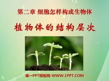 《植物体的结构层次》细胞怎样构成生物体PPT课件5