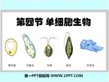《单细胞生物》细胞怎样构成生物体PPT课件3