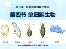 《单细胞生物》细胞怎样构成生物体PPT课件8