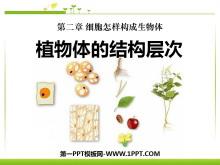 《植物体的结构层次》细胞怎样构成生物体PPT课件2