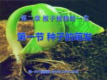 《种子的萌发》被子植物的一生PPT课件2