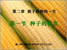 《种子的萌发》被子植物的一生PPT课件4