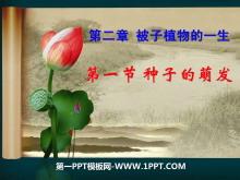 《种子的萌发》被子植物的一生PPT课件7