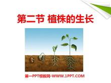 《植株的生长》被子植物的一生PPT课件3