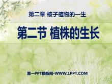 《植株的生长》被子植物的一生PPT课件4