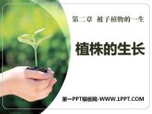 《植株的生长》被子植物的一生PPT课件5