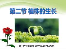 《植株的生长》被子植物的一生PPT课件6