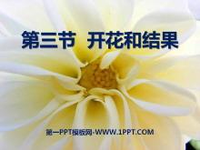 《开花和结果》被子植物的一生PPT课件