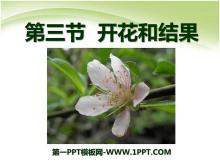 《开花和结果》被子植物的一生PPT课件3