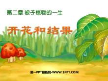 《开花和结果》被子植物的一生PPT课件4