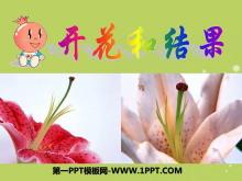 《开花和结果》被子植物的一生PPT课件7