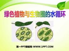 《绿色植物与生物圈的水循环》PPT课件3