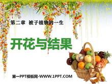 《开花和结果》被子植物的一生PPT课件6