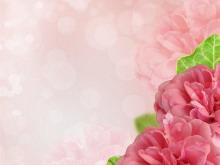粉色花卉PPT背景图片