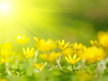 黄色背景花卉PPT背景图片