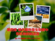 《绿色植物是生物圈中有机物的制造者》PPT课件3