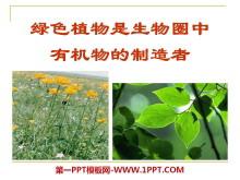 《绿色植物是生物圈中有机物的制造者》PPT课件5