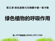《绿色植物的呼吸作用》绿色植物与生物圈中碳-氧平衡PPT课件4