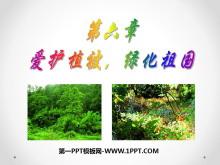 《�圩o植被,�G化祖��》PPT�n件3