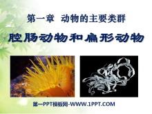 《腔肠动物和扁形动物》动物的主要类群PPT课件6