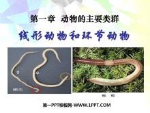 《线形动物和环节动物》动物的主要类群PPT课件6