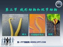 《线形动物和环节动物》动物的主要类群PPT课件2