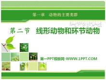 《线形动物和环节动物》动物的主要类群PPT课件3