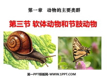 《软体动物和节肢动物》动物的主要类群PPT课件5