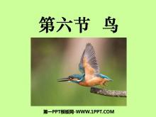 《鸟》动物的主要类群PPT课件5