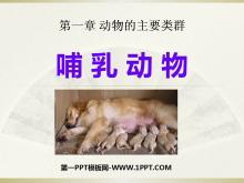 《哺乳动物》动物的主要类群PPT课件2