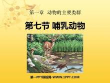 《哺乳动物》动物的主要类群PPT课件3
