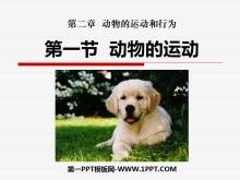 《动物的运动》动物的运动和行为PPT课件