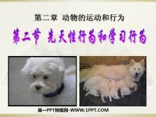 《先天性行为和学习行为》动物的运动和行为PPT课件3