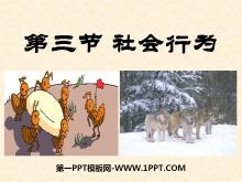 《社会行为》动物的运动和行为PPT课件7