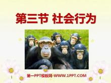 《社会行为》动物的运动和行为PPT课件8