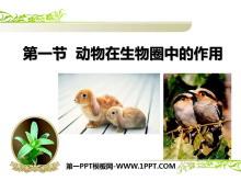 《动物在生物圈中的作用》PPT课件3