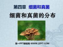 《细菌和真菌的分布》细菌和真菌PPT课件