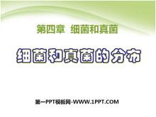《细菌和真菌的分布》细菌和真菌PPT课件4