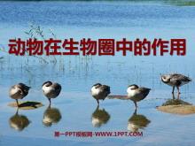 《动物在生物圈中的作用》PPT课件8
