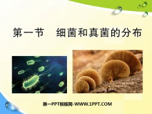 《细菌和真菌的分布》细菌和真菌PPT课件7