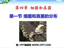 《细菌和真菌的分布》细菌和真菌PPT课件8