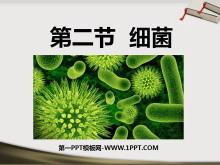《细菌》细菌和真菌PPT课件2