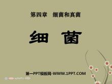 《细菌》细菌和真菌PPT课件3