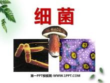 《细菌》细菌和真菌PPT课件7
