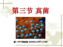 《真菌》细菌和真菌PPT课件