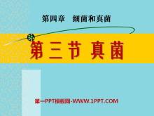 《真菌》细菌和真菌PPT课件2