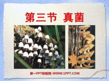 《真菌》细菌和真菌PPT课件3