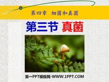 《真菌》细菌和真菌PPT课件7