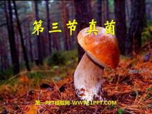 《真菌》细菌和真菌PPT课件8
